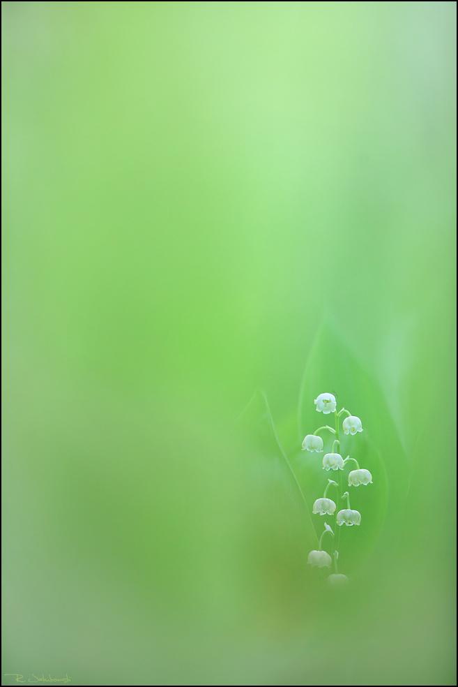 MontPhoto 2012 Lobende Erwähnung Kategorie Pflanzen