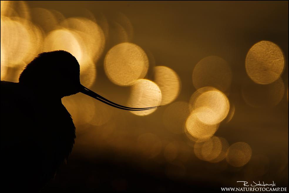 GDT Naturfotograf des Jahres 2014 8. Platz der Kategorie Vögel