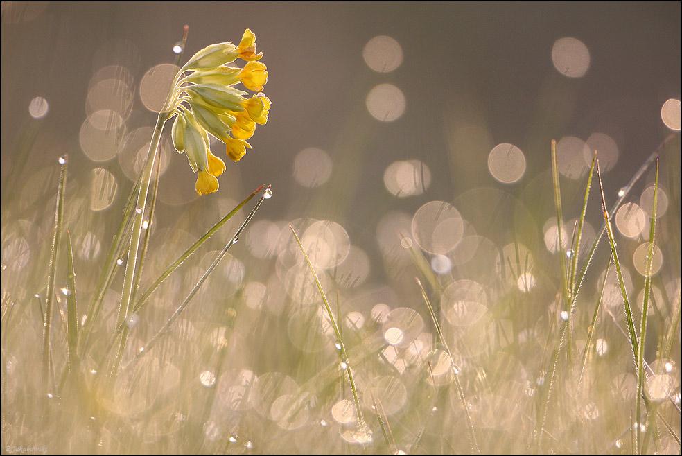 """Europäischer Naturfotograf des Jahres 2008 Kategorie Pflanzen Lobende Erwähnung """"Wärmende Sonnenstrahlen"""""""