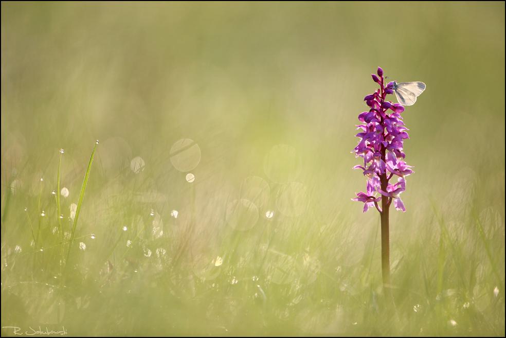 """GDT Naturfotograf des Jahres 2010 Kategorie Tiere 7. Platz """"Kurz vor dem Start"""""""
