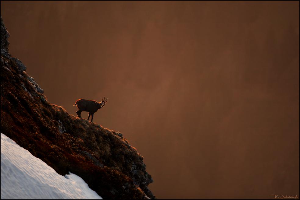 MontPhoto 2012 Lobende Erwähnung Kategorie Tiere