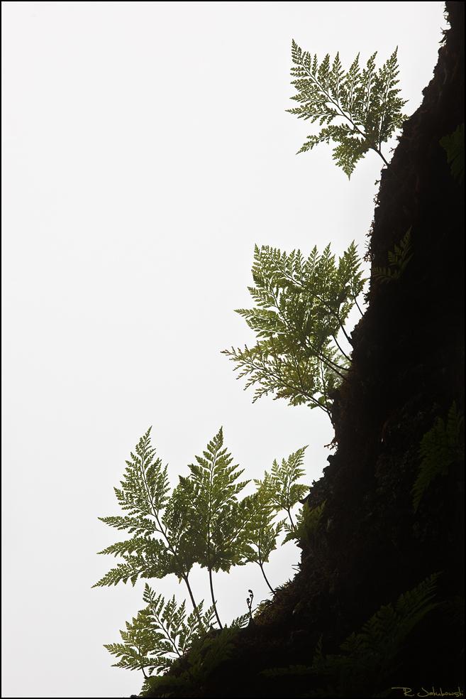 Mountain Maria Luisa 2012 Lobende Erwähnung Kategorie Pflanzenwelt