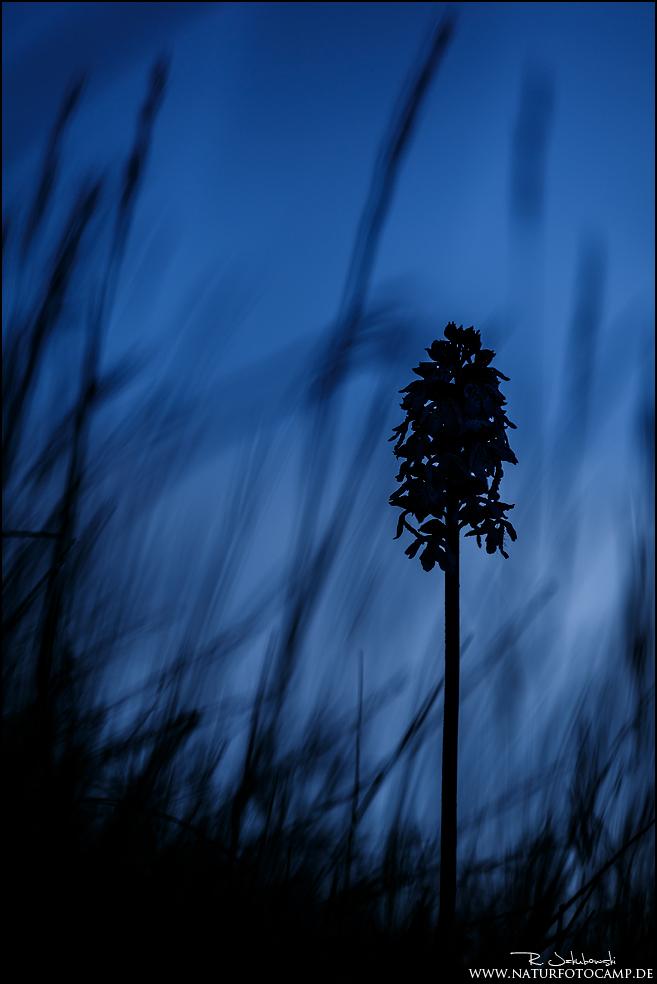 Orchideenarmut …