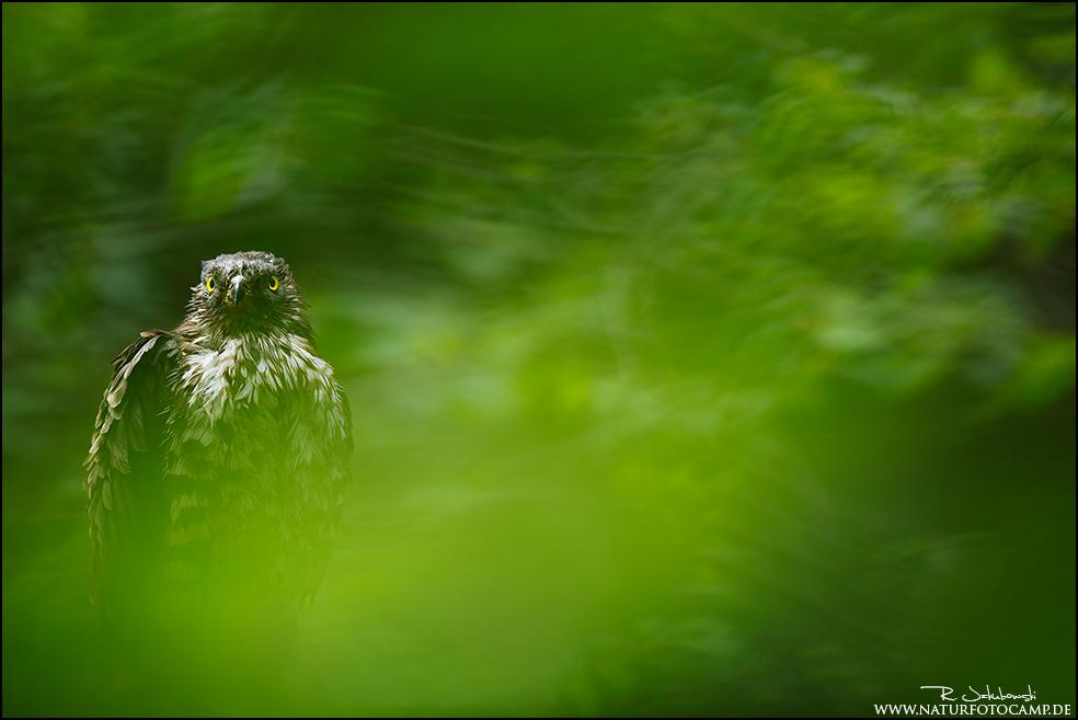 Ein Abstecher in den Nationalpark Bayrischen Wald