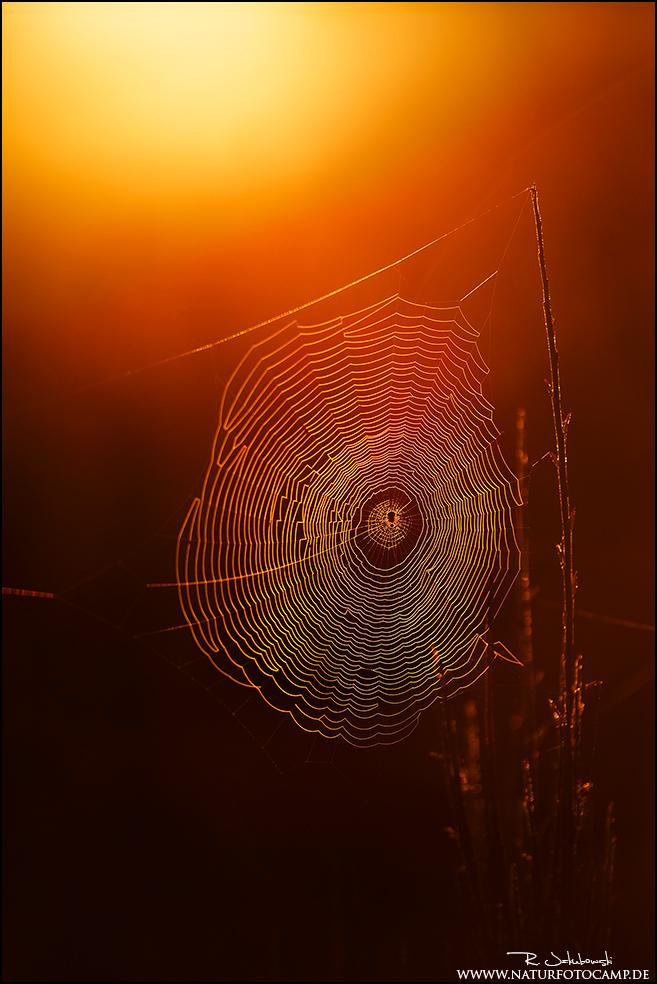 Herbst in der Mehlinger Heide