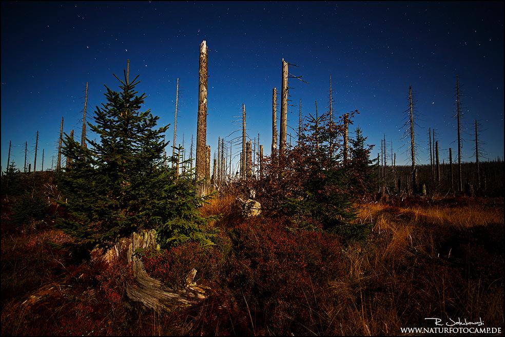Herbst im Nationalpark Bayrischer Wald