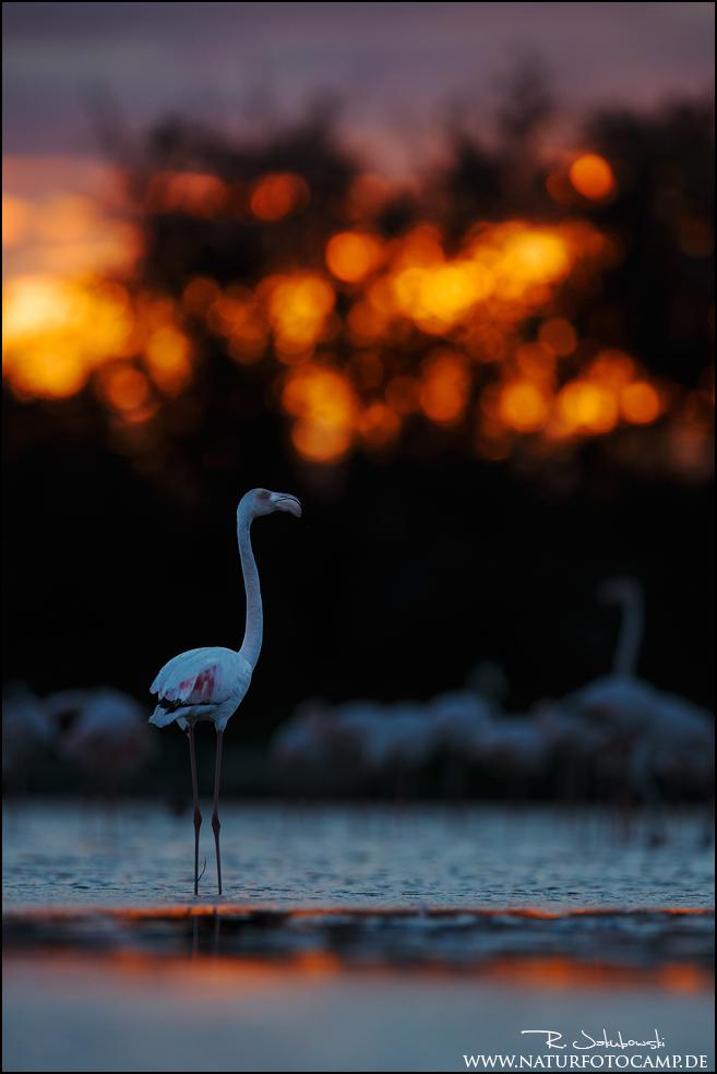 Vogelfotografie im Süden