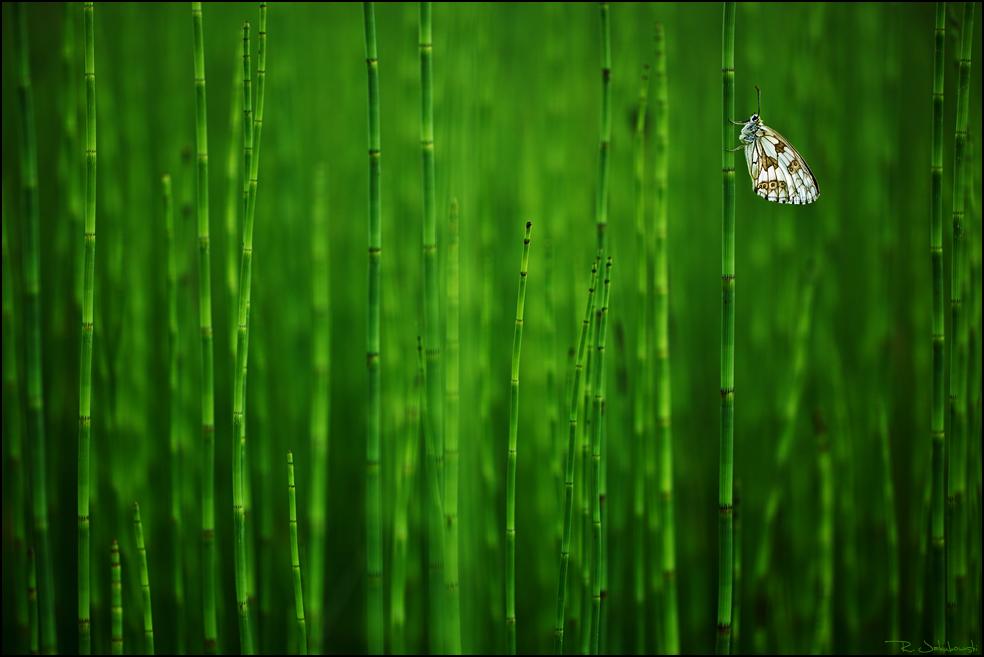 Gewinner beim Nature Images Award