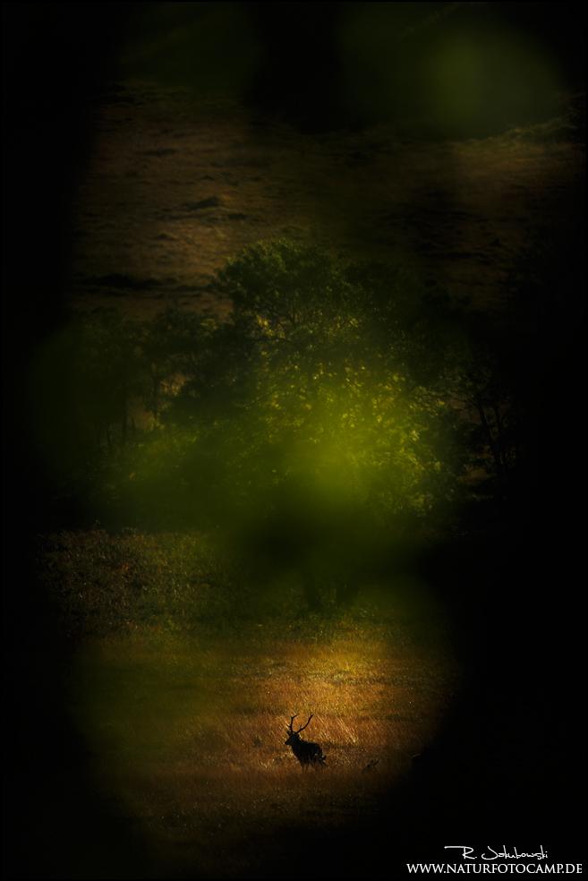 Mit dem Hirsch im Land von Fasan und Rotkehlchen