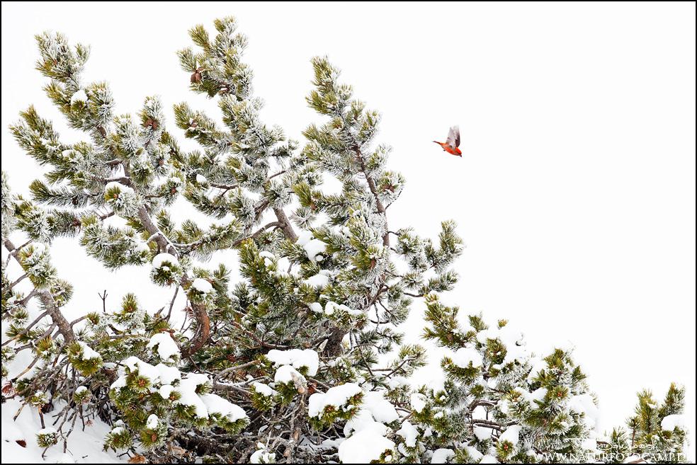 Tierischer Schnee