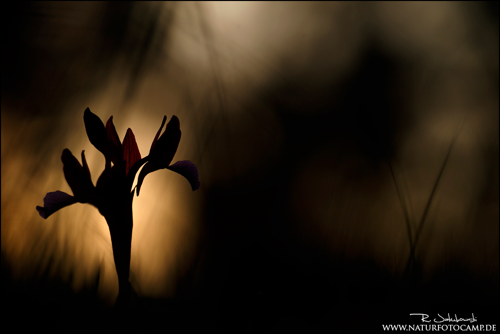 Korsika und die Orchideen