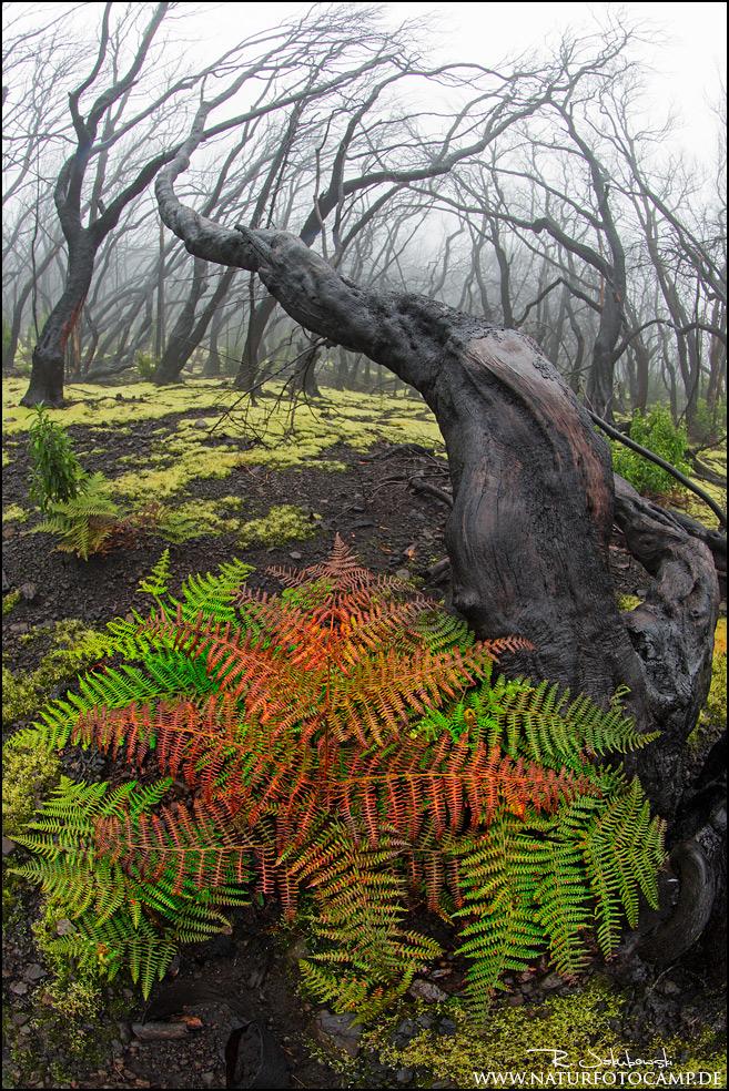 GDT Naturfotograf des Jahres 2016 5. Platz der Kategorie Pflanzen und Pilze