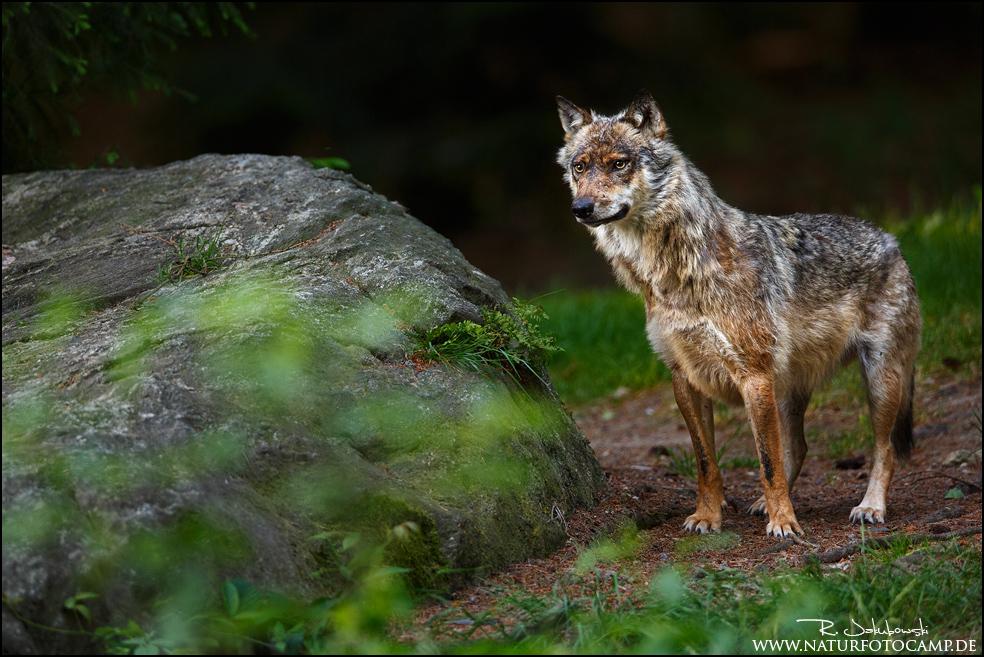 Workshop im Nationalpark Bayerischer Wald