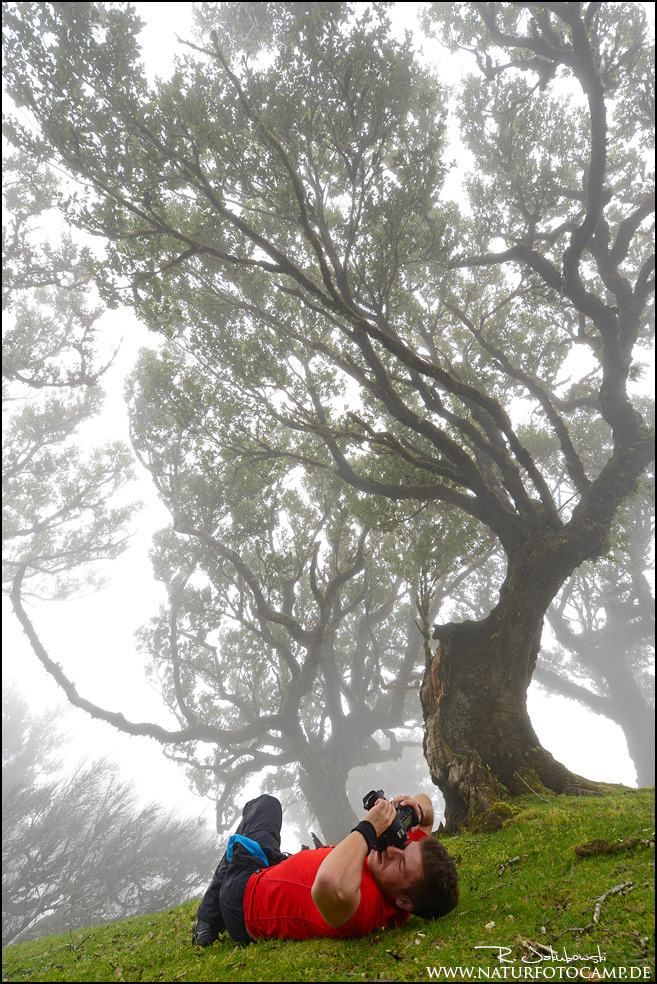 Vom Walde Madeiras