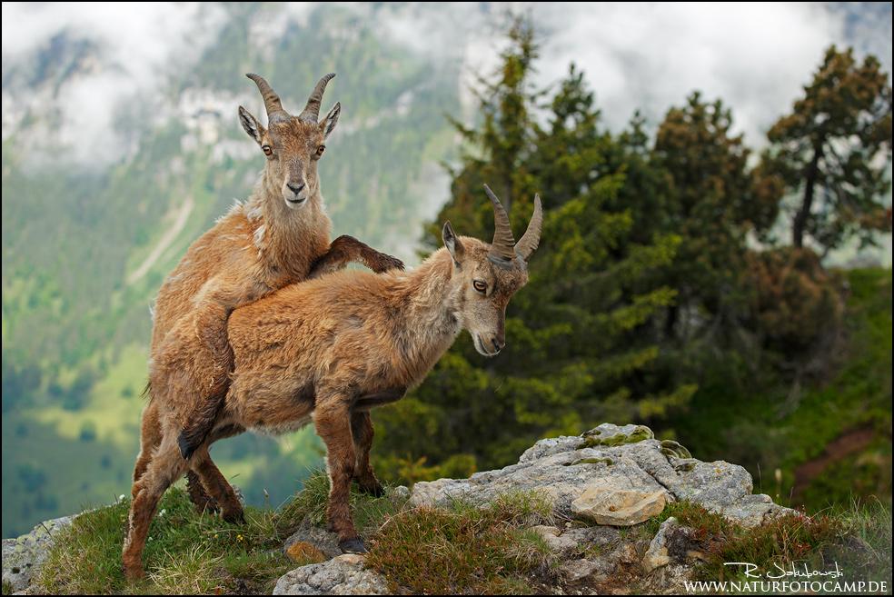 Alpengalerie online!