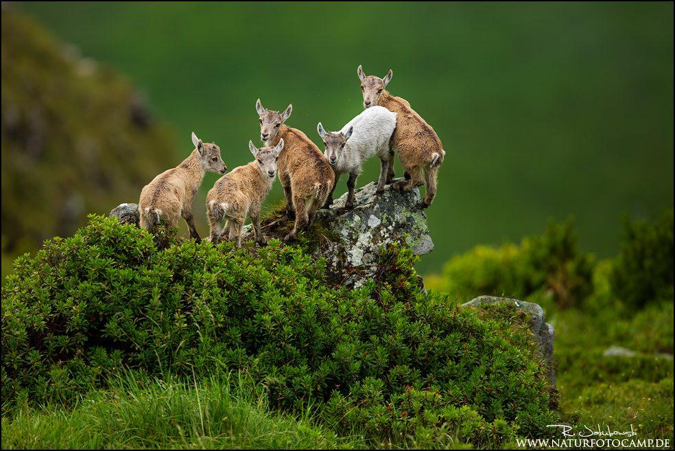 GDT Naturfotograf des Jahres 2021 - Kategorie