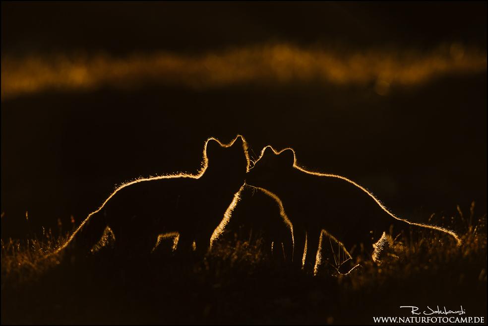 GDT Naturfotograf des Jahres 2015 4. Platz der Kategorie Emotionen