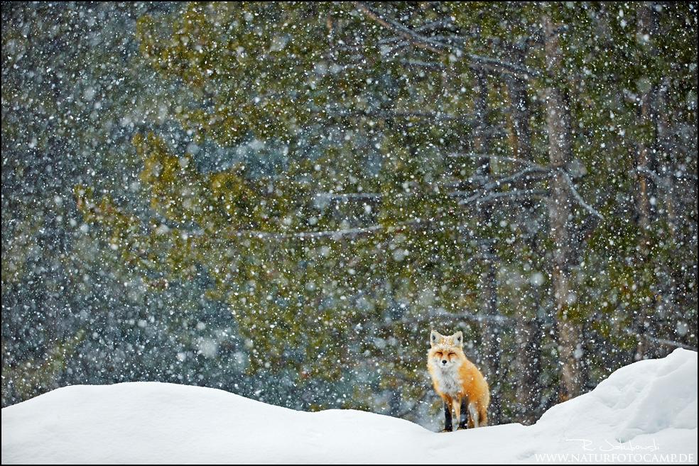 Natureimagesaward, bestes Einzelbild