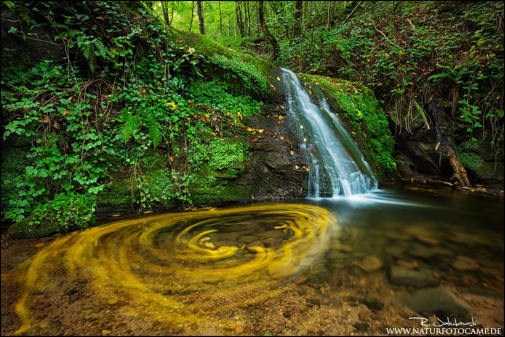 Herbstsuche in der Eifel