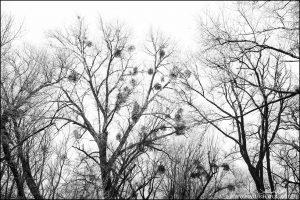 Raureif in Schwarz Weiß
