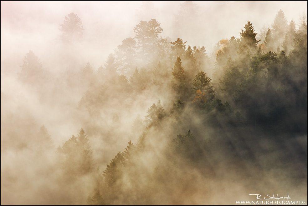 Intimate Landscape Wald