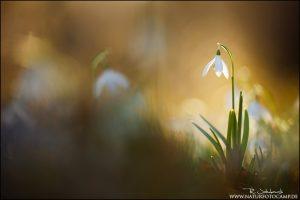 Magie des Lichts – 30min Pflanzenfotografie