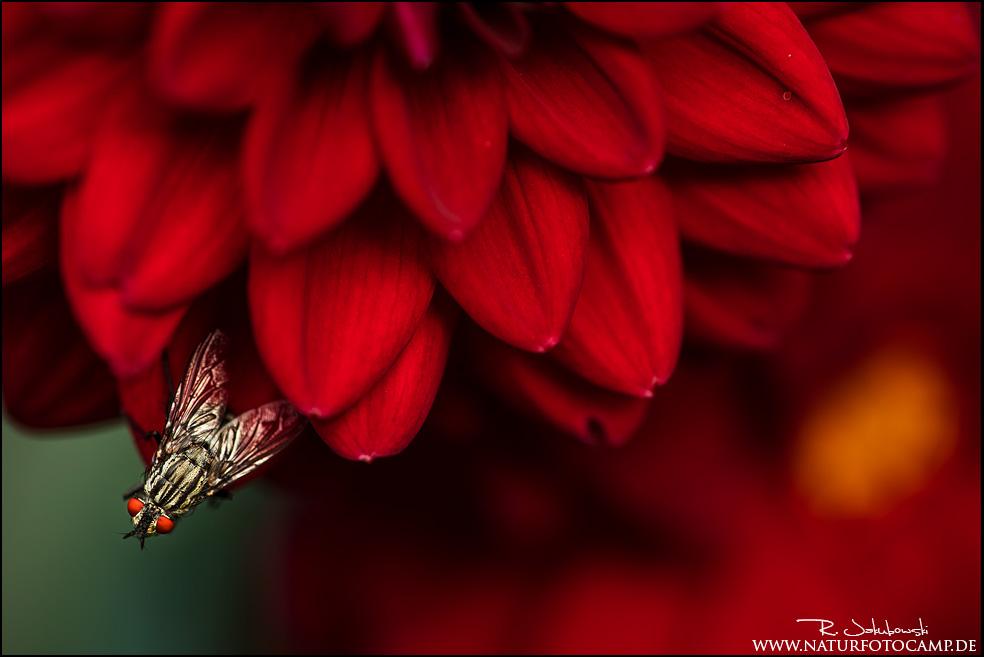 Kreative Pflanzenfotografie am Michaelshof Sammatz