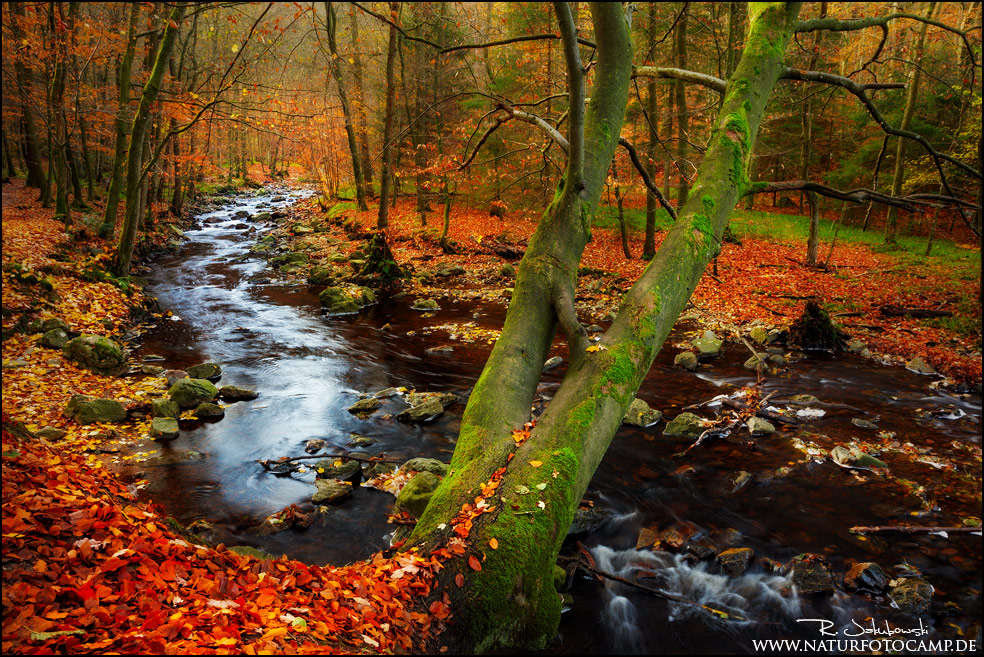 Herbstende an der Hoegne