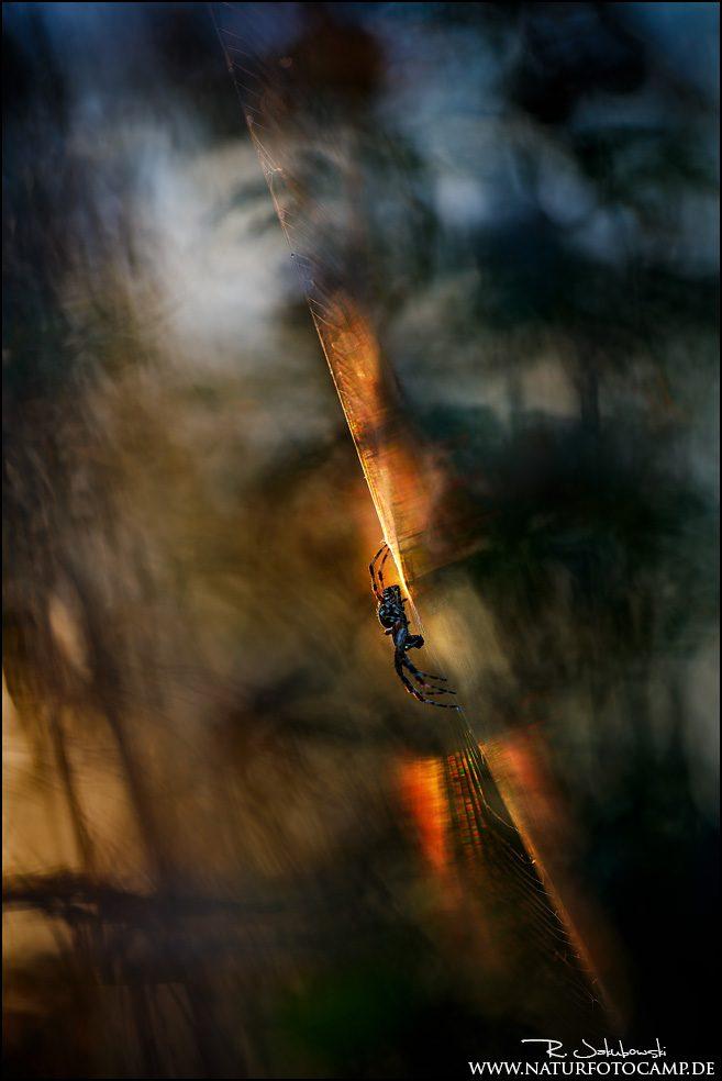 GDT Naturfotograf des Jahres 2020 - 6. Platz - Andere Tiere