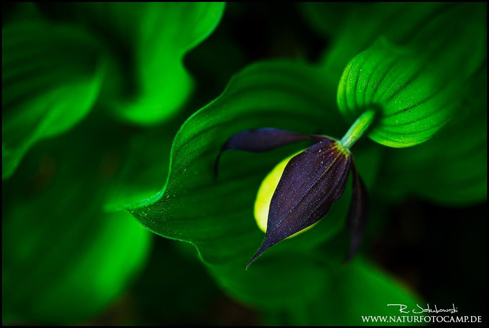 Die Quintessenz der kreativen Naturfotografie