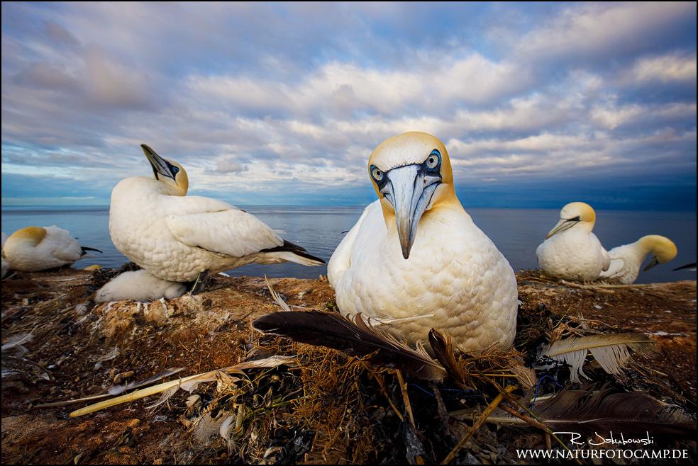 Helgoland – unsere Flucht vor der Insel