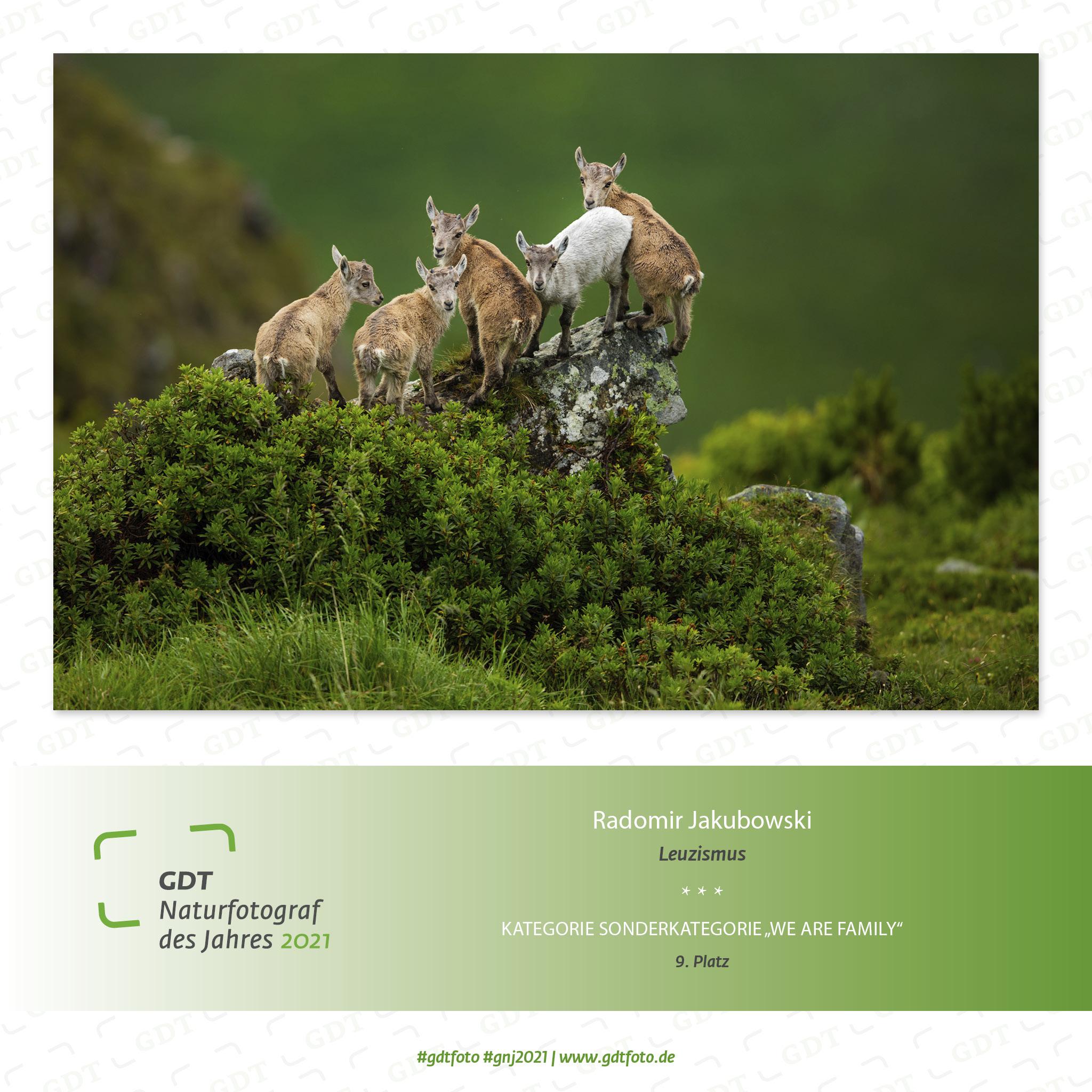 GDT Naturfotograf des Jahres 2021 und Leuzismus beim Steinbock