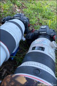 Canon EOS R5 Test und Erfahrungen Tierfotografie und Naturfotografie – der Gamechanger?