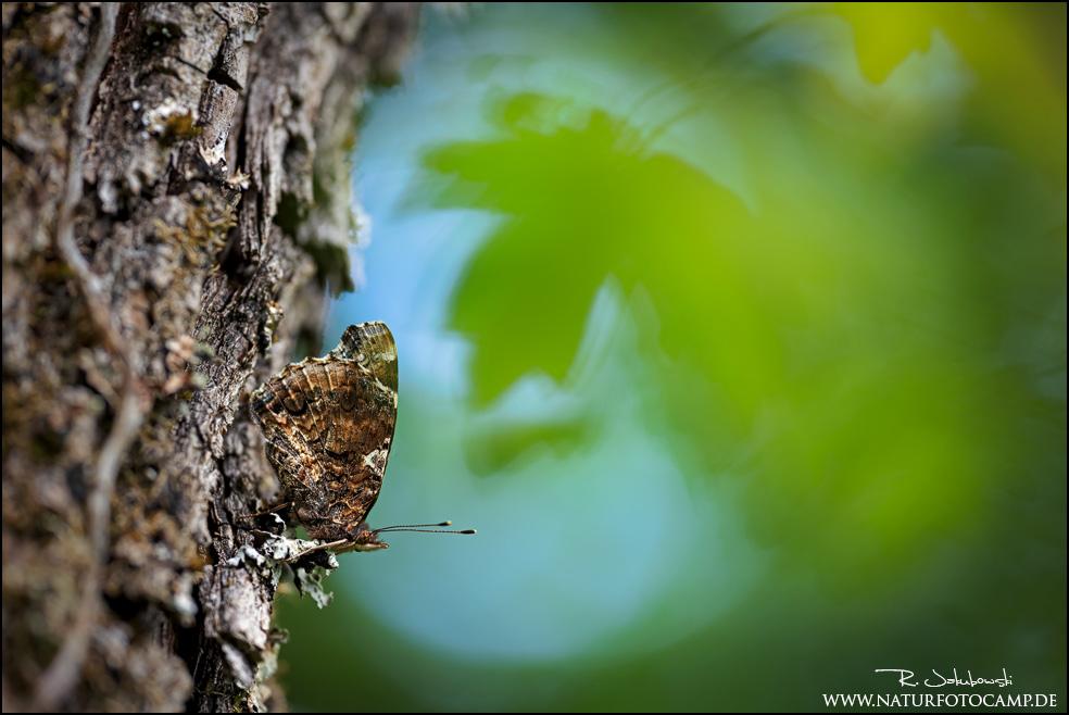 Schmetterlings- Pflanzen- und Makrofotografie bei jedem Wetter?