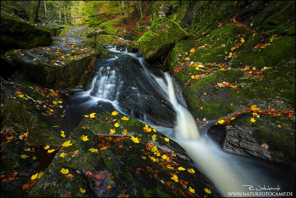 Workshoprückblick im Nationalpark Bayerischer Wald